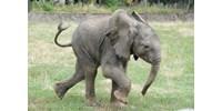 Áram ütött agyon hét elefántot