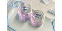 Van remény: 12 embriót hoztak létre a fenyegetett orrszarvú megmentésén dolgozó tudósok