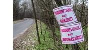 Itt a madárinfluenza: újabb 200 ezer kacsát kell levágni