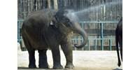 Megható videonekrológgal búcsúzik Ashától az Állatkert