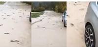Kiöntött a folyó, halak ficánkolnak az úttesten Olaszországban - videó