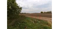 Elcsatoltak egy területet Magyarországtól, Vértestarcsa mellett mostantól egy négyzetméternyi Arcadia van