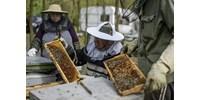 Megvan a magyar méz útja - csak pont a másik irányba kellene menni rajta