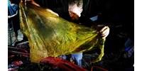 Fotók: 40 kilónyi műanyag zacskót szedtek ki egy bálnából a Fülöp-szigeteknél