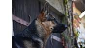 Baj van egy itthon is kapható kutyaeledellel