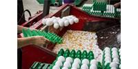 Feltalálták a tökéletes színű tojást